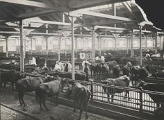Øksnehallen foto fra 1901-1919