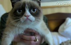 30 Things You Didn't Know about Grumpy Cat