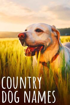 country dog names Country Dog Names, Cute N Country, Fun Facts About Dogs, Dog Facts, Fox Red Labrador Puppy, Husky Lab Mixes, Puppy Names, Red Dog, Dog Quotes