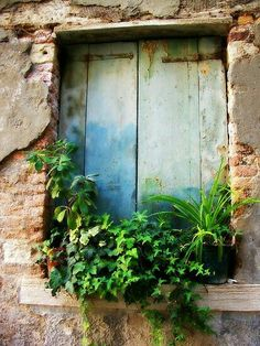 Pretty Old Window w/Greenery Old Windows, Windows And Doors, Architecture Windows, Beautiful Places, Beautiful Pictures, Old Doors, Closed Doors, Window Boxes, Doorway
