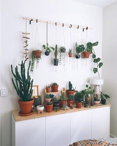 Love how vertical space is filled to maximize the green in this plant collection and yet the overall aesthetic is still somehow minimal. Thanks for sharing in #InteriorRewilding @thehiddenadventure! We post a new photo from #InteriorRewilding each week. Tag your indoor green oasis for a chance to be featured.