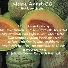 Melon, Amish OG Seeds.  When you sow this package of seeds you are taking part in the preservation of healing plants worldwide.  Order now.  http://www.localharvest.org/melon-amish-og-seeds-C24572