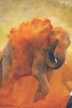Find images and videos about elephant, wildlife and the power of nature on We Heart It - the app to get lost in what you love. Beautiful Creatures, Animals Beautiful, Happy Holi Photo, Art Indien, Animals And Pets, Cute Animals, Wild Animals, Indian Elephant, African Animals