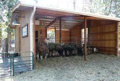 Oregon Beach Rentals - Oregonshearwater, Gullhouse, Owl Forest Studio Seal Rock and Portland Vacation Rentals Cattle Barn, Beef Cattle, Sheep Shelter, Goat Shed, Barn Layout, Oregon Beaches, Homestead Farm, Farm Fun, Future Farms