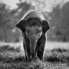baby elephant. beautiful