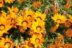 Blumen auf den Scilly Islands