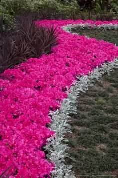Image detail for -Planting of Azeleas Curve pattern Callaway Garden