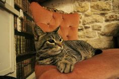 Le Cafe des Chats in Paris: delicious coffee and play with some furry cats. Read the full blog post on PiPaParis