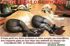 History, Animals, Historia, Animales, Animaux, Animal, Animais
