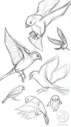 40 Free and Simple Animal Sketches Ideas and Inspirations for Drawing – Samir – Animal Draw… . Secrets of being well-groomed 40 Free and simple animal sketches Ideas and inspiration for drawing – Samir – Animal Draw… . Pencil Art Drawings, Bird Drawings, Art Drawings Sketches, Cool Drawings, Sketch Drawing, Drawing Ideas, Drawing Tips, Learn Drawing, Drawing Drawing