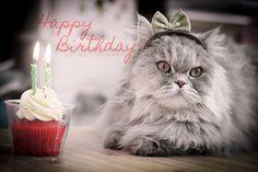 Cute Happy Birthday Cats Nice Kittens 25317wall.jpg