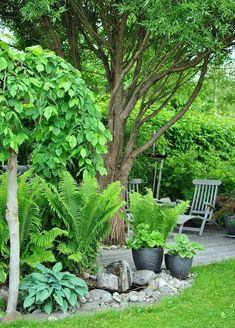 50 + Simple Shade Garden Design-Ideen - Garten - Desings World Tropical Garden Design, Backyard Garden Design, Backyard Landscaping, Landscaping Ideas, Tropical Gardens, Tropical Plants, Backyard Designs, Tropical Landscaping, Terrace Garden