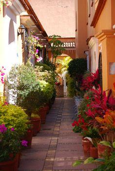 Oaxaca City Alleyway. Love the walkway lined with plants.