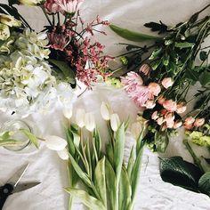 1567 Best Flowers Images In 2019 Beautiful Flowers Gardens Plants