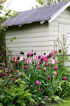 Ideas Garden Shed Colours Spring Back Gardens, Outdoor Gardens, Shed Colours, Tulips Garden, Spring Bulbs, Spring Garden, Dream Garden, Garden Inspiration, Porches