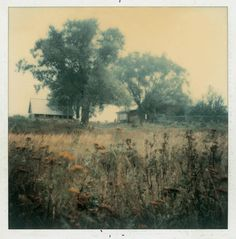 Andrei Tarkovski Polaroid Photograph - ( Polaroid Print )