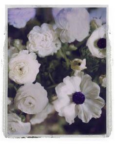 gallery-bloom15   lidewij edelkoort