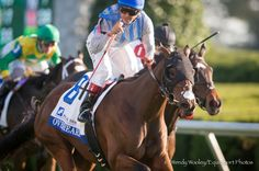 Overheard winning the Valley View Stakes at Keeneland Oct 18, 2013. Owned by Pin Oak Stud, who coincidentally sponsored the Grade 3 race. She's by Macho Uno out of Whisper to Me, by Thunder Gulch.