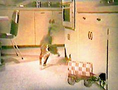 Chuckwagon dogfood commercial - I used to love how that little wagon traveled through the kitchen then disappeared into a cupboard!