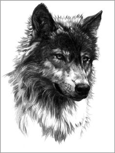Secred animal of Turks...Gray Wolf...