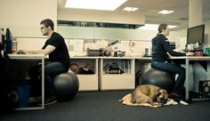 A pet-friendly office is a #Mindful office. Check out these #Mindful companies that allow pets owners to bring their furry-friends to the office. #MindfulLiving OurMLN.com