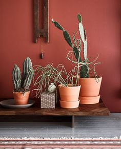 Terracotta pots, dark wood furniture and earthy colours is a trend we're super keen on.