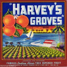 Citra Marion County Queen of Silver Springs Orange Fruit Crate Label Art Print