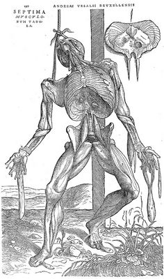 De Humani Corporis Fabrica - On The Fabric Of The Human Body One of the best anatomy books that defined the century, created by Andreas Vesalius in 1543 Andreas Vesalius, Anatomy Drawing, Anatomy Art, Human Anatomy, Illustrations Médicales, Medical Illustrations, Male Figure Drawing, Arte Obscura, Fine Art Prints