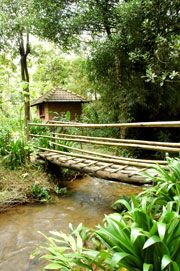 Rainforest Retreat at Mojo Plantation - combining Eco-tourism, Organic Farming and Environmental Education. #Travel #Ecotourism #India