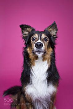 SHOCK! by alicjazmyslowska #animals #animal #pet #pets #animales #animallovers #photooftheday #amazing #picoftheday