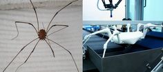 Researchers at Germany's Frauenhofer Institute built this robot to move like a spider, keeping four legs on the ground at all times while the other four take steps.    Just like real spiders, this critter will be able to fit into tight spaces, so it can find people buried under debris in emergency situations. Even arachnaphobes will breathe a sigh of relief when they see one coming their way.