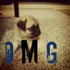 ;) Dogs, Animals, Animales, Animaux, Pet Dogs, Doggies, Animal, Animais