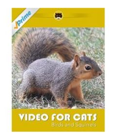 Movie for Cats to Watch: Squirrels and Birds. Watch your cat react to the the small birds and squirrels feeding on the ground.  More Videos for Cats: www.tvbini.com #catTV #TVforcats #tvbini #movieforcats #entertainmentforcats #catgames #videoforcats #cats #pets #videosforcats #catentertainment
