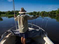Tracking fish in the South Alligator River region| Movements have been tracked by boat and helicopter every two weeks since the fish were released