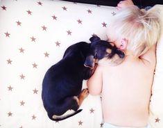 Este cãozinho e este bebê são os mais adoráveis companheiros de soneca