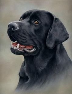 Animals, Pastels paintings & artwork, SAA
