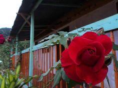 EL CAIRO - Variedad de Paisajes Spanish Pronunciation, Bella, Detail, Flowers, Plants, Cairo, Colombia, Plant, Royal Icing Flowers