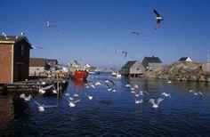 Peggy's Cove, Nova Scotia Photo Courtesy Nova Scotia Tourism, Culture and Heritage Nova Scotia Tourism, New England Cruises, Atlantic Canada, Canadian Rockies, Fishing Villages, Canada Travel, East Coast, Places To Go, Travel Photography