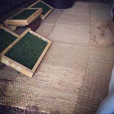 Cat Playground, arranhador para gatos, prateleira para gatos,  Cat Furnitures, móveis para gatos, Nicho para gatos La RoOteria Atelier