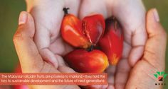 We're disappointed by the untruths being shared by the Unmask Palm Oil campaign. Not all palm oil is the same. Palm Oil Benefits, Food Labels, Disappointed, Natural World, Conservation, Campaign, Environment, United States, Canada