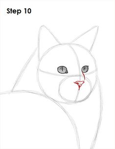 Maine Coon Cat Drawing 10 - Beautiful and different ideas
