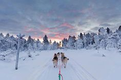 Dog Sledding in Lapland, Finland - Yegor Korzh :: Travel Photography Malta, Alaska, Husky, Lapland Finland, Winter Images, Beautiful Places To Travel, Florida, Vacation Trips, Places To See