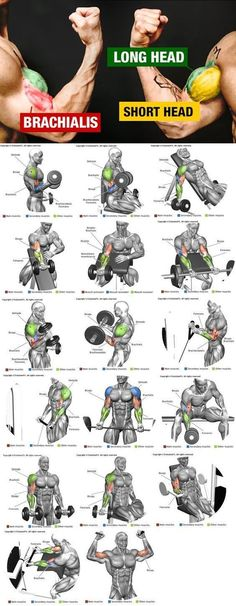 💪HOW TO WIDER ARMS | Video & Guide - weighteasyloss.com - Fitness Lifestyle | Fitness and Bodybuilding Review Actuality