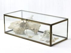 Our Medium Glass Box is a wonderful showcase for your jewellery, treasures, collectables and succulents! If you are looking for the perfect gift ideas for her this Valentine's Day, the class jewellery box would make the ideal choice! Vintage Furniture For Sale, Furniture Sale, Cheap Furniture, Glass Display Box, Glass Boxes, Display Boxes, Glass Jewelry Box, Jewellery Boxes, Hygge