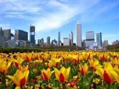 Visit Grant Park in Chicago