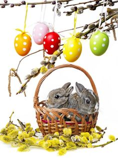 $27.70 (Buy here: https://alitems.com/g/1e8d114494ebda23ff8b16525dc3e8/?i=5&ulp=https%3A%2F%2Fwww.aliexpress.com%2Fitem%2F200cm-150cm-easter-photography-backdrops-Basket-branch-bunny-photo-studio-background-Easter-Day-ZJ%2F32264851595.html ) 200cm*150cm easter photography backdrops Basket branch bunny photo studio background Easter Day ZJ for just $27.70