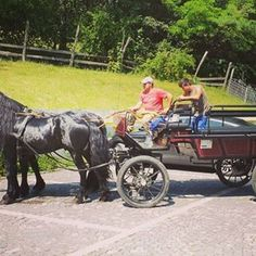 Join us for a ride! Romania, Antique Cars, Join, Horses, Antiques, Instagram, Antiquities, Antique, Horse
