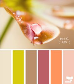 petal dew // design seeds