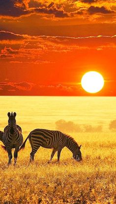 African sunset in zebra country.