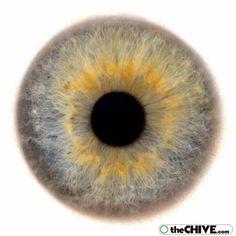 eye-iris-eyeball-retina20